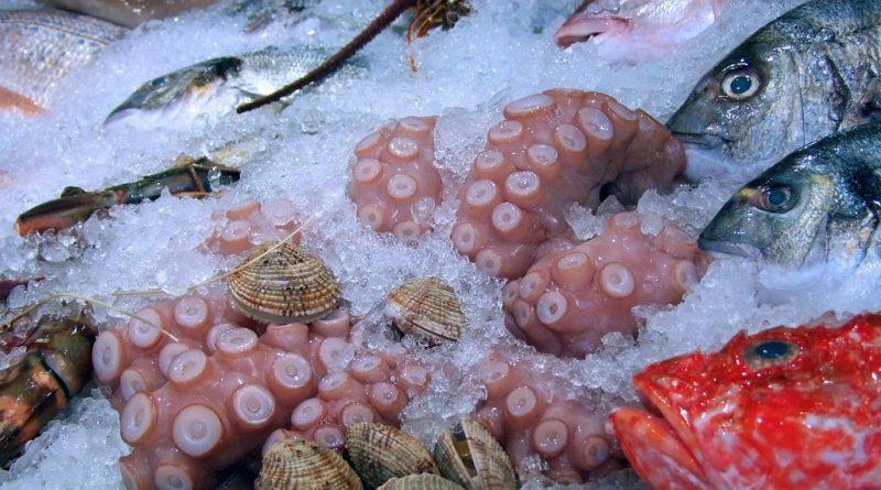 Calamari or Fish Oil