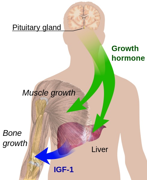 Endocrine growth